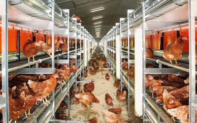 Clever solutions to make egg and poultry farms future-proof